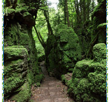 The Enchanted Forest – Why you must visit the Forest of Dean2